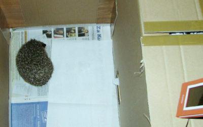 Budowa hibernatora dla jeży